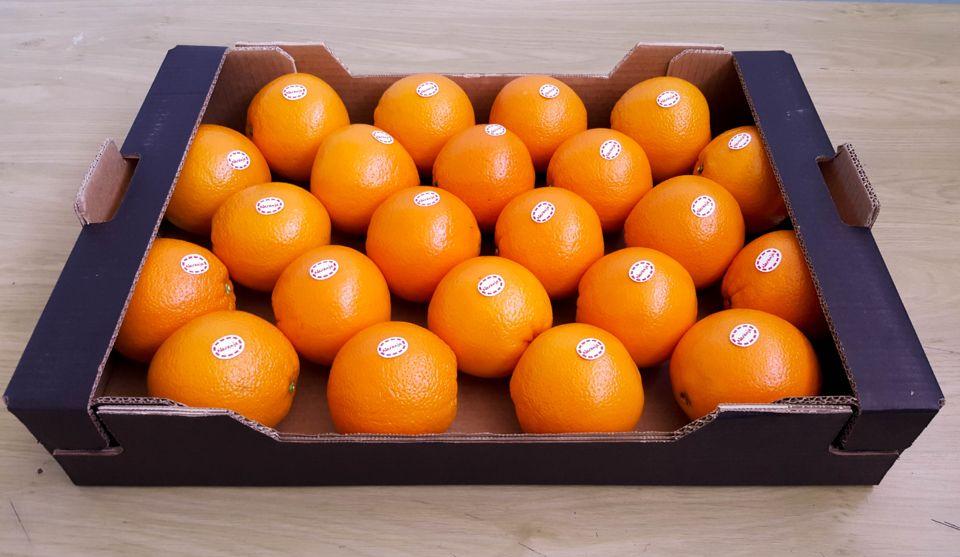 naranja-carton-encajado-10kg-fuster